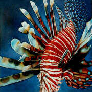 the lionfish sleeps tonight